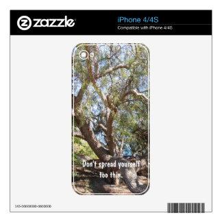 Sprawling Tree Near Santa Barbara on Coast Skin For iPhone 4S