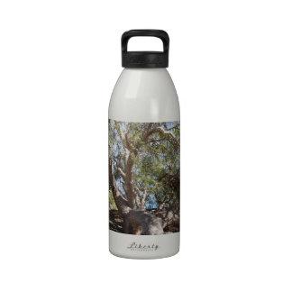 Sprawling Tree Near Santa Barbara on Coast Water Bottles