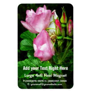 Spray of Beautiful Pink Roses and Rosebuds Magnet