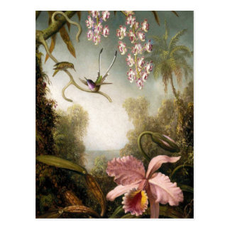 Spray Orchids with Hummingbird Postcard