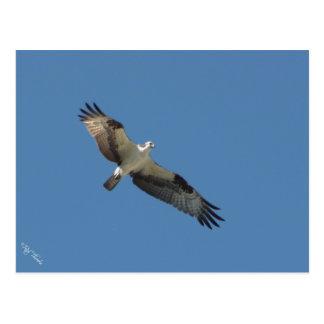 Spread Wings Postcard