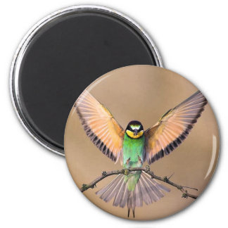 Spread your wings and fly 2 inch round magnet