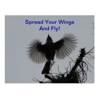 Spread Your Wings And Fly, Tufted Titmouse Postcard