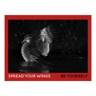 Spread Your Wings Be Yourself Mandarin Duck Photo Poster