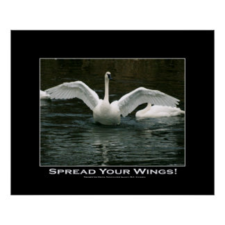 SPREAD YOUR WINGS Swan Photo Print