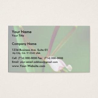 Spreading pogonia business card