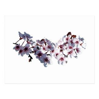 Sprig of Cherry Blossoms Postcard