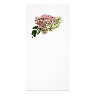 Sprig of Hydrangea Card