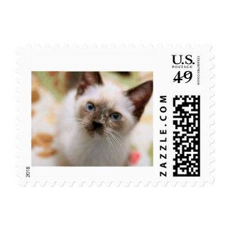 Sprig Stamps
