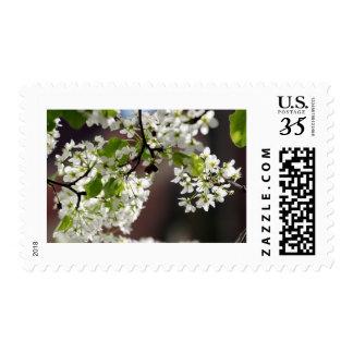 Spring Apple Blossom Postage