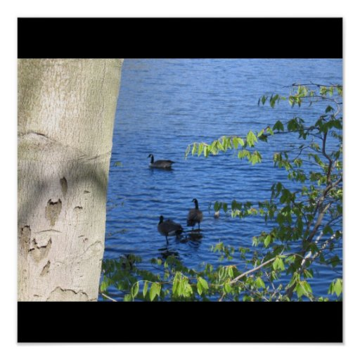 Spring at the Mill Pond Poster