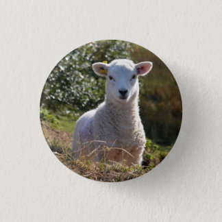 Spring Baby Lamb Button / Badge