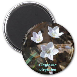 Spring Beauty 2 Inch Round Magnet