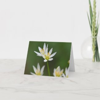 Spring Beauty Bloom Folded Note Card