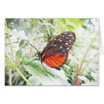 Spring Beauty Greeting Cards