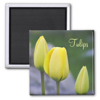Spring Beauty Soft Yellow Tulips 2 Inch Square Magnet