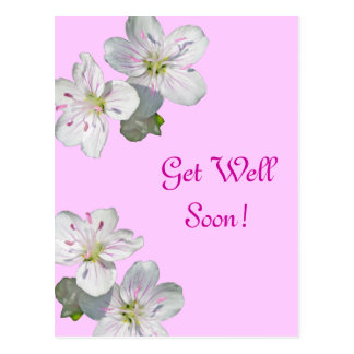 Spring Beauty Wildflower Get Well Soon Postcard
