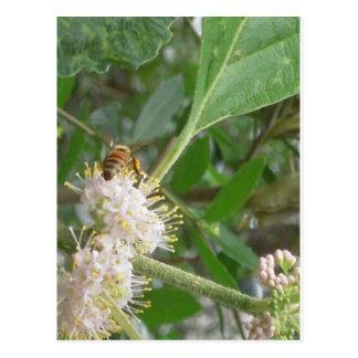 Spring Bee Photo Postcard