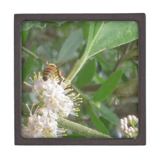 Spring Bee Photo Premium Jewelry Boxes
