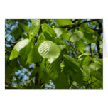 Spring Birch Leaves Green Nature Scene Blank Greeting Card