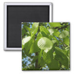 Spring Birch Leaves Green Tree 2 Inch Square Magnet