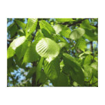 Spring Birch Leaves Green Tree Canvas Print