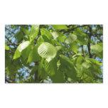 Spring Birch Leaves Green Tree Rectangular Sticker