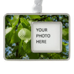 Spring Birch Leaves Green Tree Silver Plated Framed Ornament