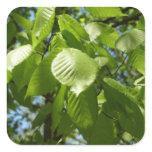 Spring Birch Leaves Green Tree Square Sticker