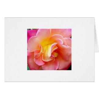 Spring Bloom Card