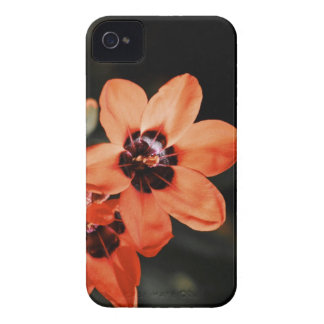 Spring Bloom iPhone 4 Case-Mate Cases