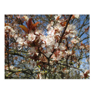 Spring Bloom Postcard