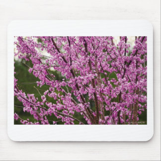 Spring Blooming Eastern Redbud Blossoms Mouse Pad