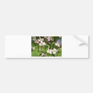 Spring Blooming Pink Dogwood Blossoms Bumper Sticker