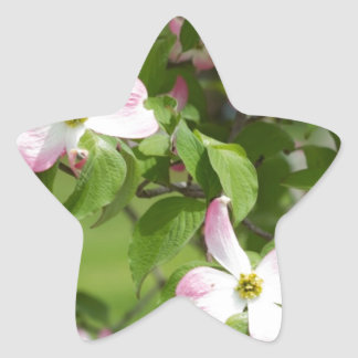 Spring Blooming Pink Dogwood Blossoms Sticker