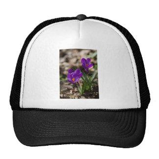 Spring Blooming Purple Crocus Flowers Hat