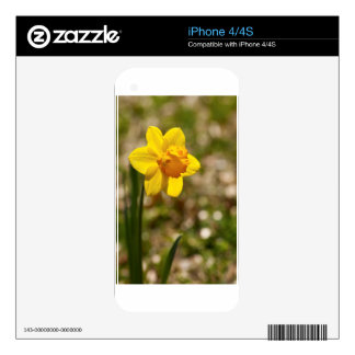 Spring Blooming Yellow Daffodil Blossom iPhone 4 Skin