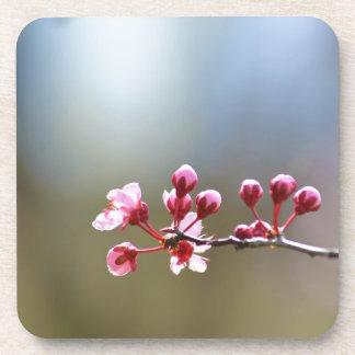 Spring Blooms Drink Coaster