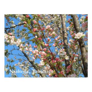 Spring Blooms in Nashville Postcard