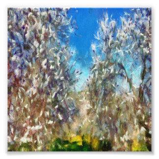 Spring Blossom Photo Print