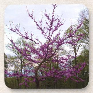 SPRING BLOSSOM TREE coaster