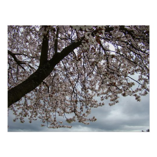Spring  Blossoms 11 ART PRINTS CANVAS POSTERS