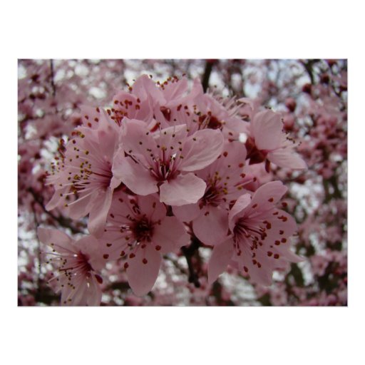 Spring Blossoms ART 6 MOTHER'S DAY GIFTS Art Poster