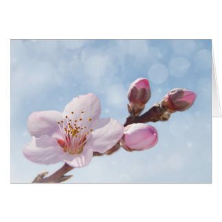 Spring Blossoms Card
