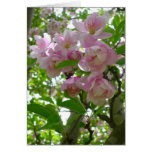 Spring Blossoms Greeting Cards
