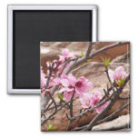 Spring Blossoms on Zion Red Rocks Magnet