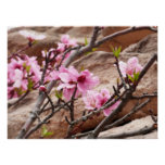 Spring Blossoms on Zion Red Rocks Poster