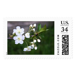 Spring Blossoms Postage