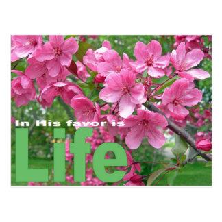 Spring Blossoms Postcard