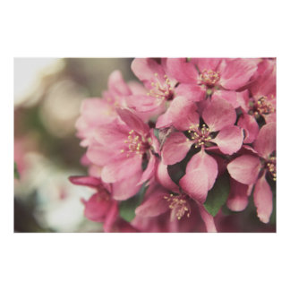 Spring Blossoms Posters